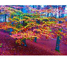 Forest, color leaves Photographic Print
