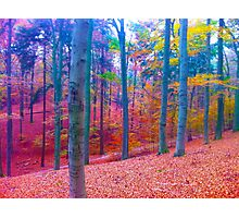 forest in color Photographic Print