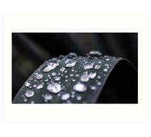 Dew Drops #1 Art Print