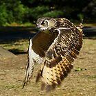 An Owl inflight by Ben  Warren