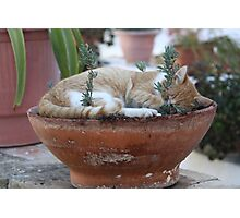 Corfu Cat Photographic Print
