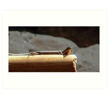 Skink on a Stick Art Print
