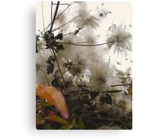 Furry Flora Canvas Print
