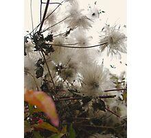Furry Flora Photographic Print