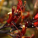 Flax Flower by Steven Carpinter