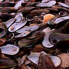 Shells by Steven Carpinter