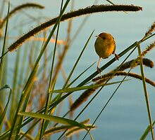 Among the reeds by Liza Yorkston