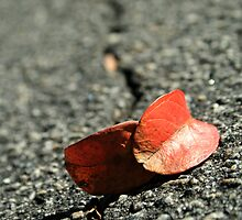 Fallen Leaves by Briana McNair