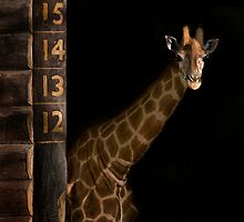 ....this tall by Lisa  Kenny