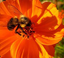 you're the bees knees to me by Pam Utton