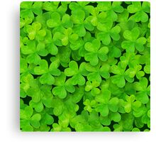 Green clovers leaves field Canvas Print