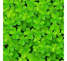 Green clovers leaves field Photographic Print