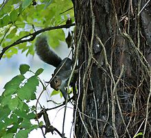Squirrel Clinging To A Tree by Linda Yates