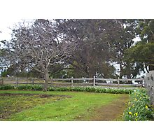 the tree & the  fence Photographic Print