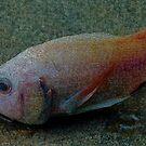 Super Floppy Fish by mrfriendly