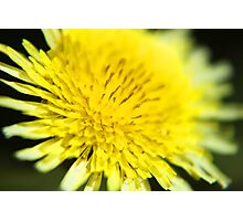 Small Yellow Flower Photographic Print