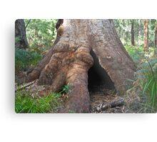 Ancient Tingle Tree. Metal Print