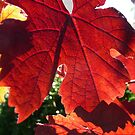 Leaf by Steven Carpinter