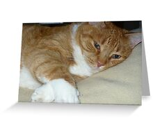 Soft and Purry!! Greeting Card