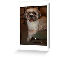 Introducing ToTo Greeting Card