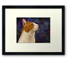 Cute Brown and White Furry Cat Looking to Right Framed Print
