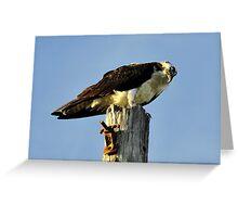 Osprey on pole Greeting Card