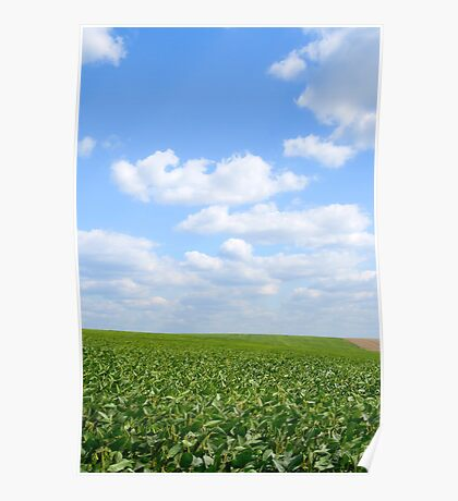 Sausage field Poster