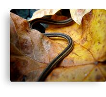 a snake in the leaves Canvas Print