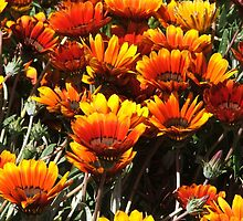 Daisies (3054) by ScenerybyDesign