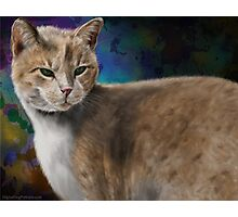 Beautiful Furry and Fluffy Brown Cat Portrait Photographic Print
