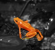 Orange Froggie! by Alyce Taylor