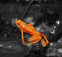 Orange Froggie! by Alyce Taylor