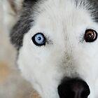 Blue Eye by Julian Fulton-Boote