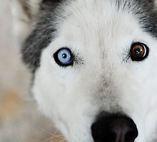 Blue Eye by Julian Fulton-Boote