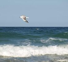 Seagull by Sebastian Whitehouse