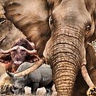 A COLLAGE OF AFRICA&#x27;S &quot;BIG 5&quot; -  by Magaret Meintjes