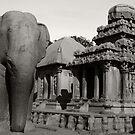 Stone Elephant by Jane McDougall