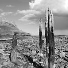 Lindisfarne Castle by Mike Paget