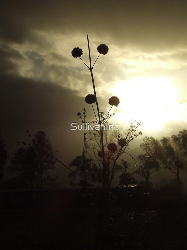Shaddowed flower by SullivanInc