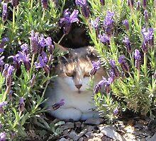lavender cat by ashroc