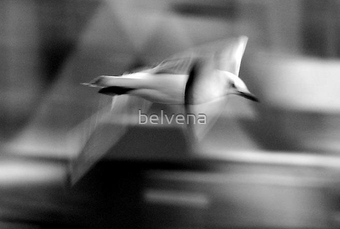 turbo charged gull. by belvena
