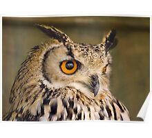Bengali Eagle Owl Poster