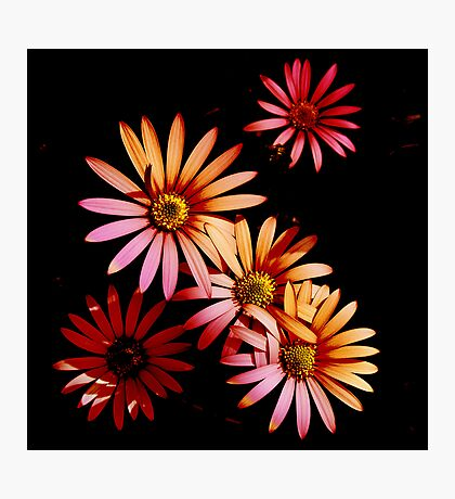 More Bloomin' Flowers Photographic Print