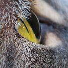 A Cats Eye View by Sheri Nye