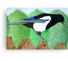 A Magpie perched on a fence Canvas Print