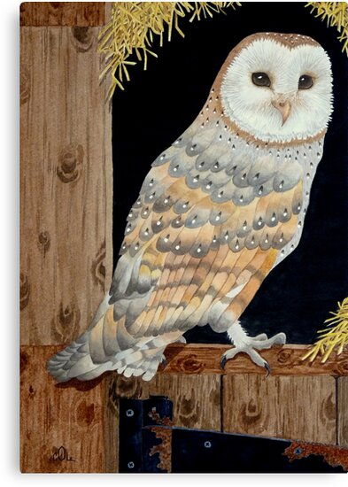 A Barn Owl in a barn - where else! by aquartistic