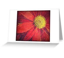 Sun Flares Greeting Card