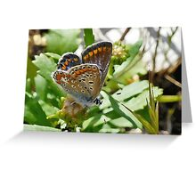 Common Blue female Greeting Card