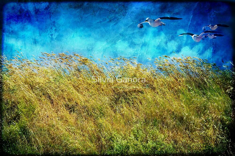 I feel the wind by Silvia Ganora