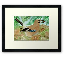A Jay in the fall Framed Print